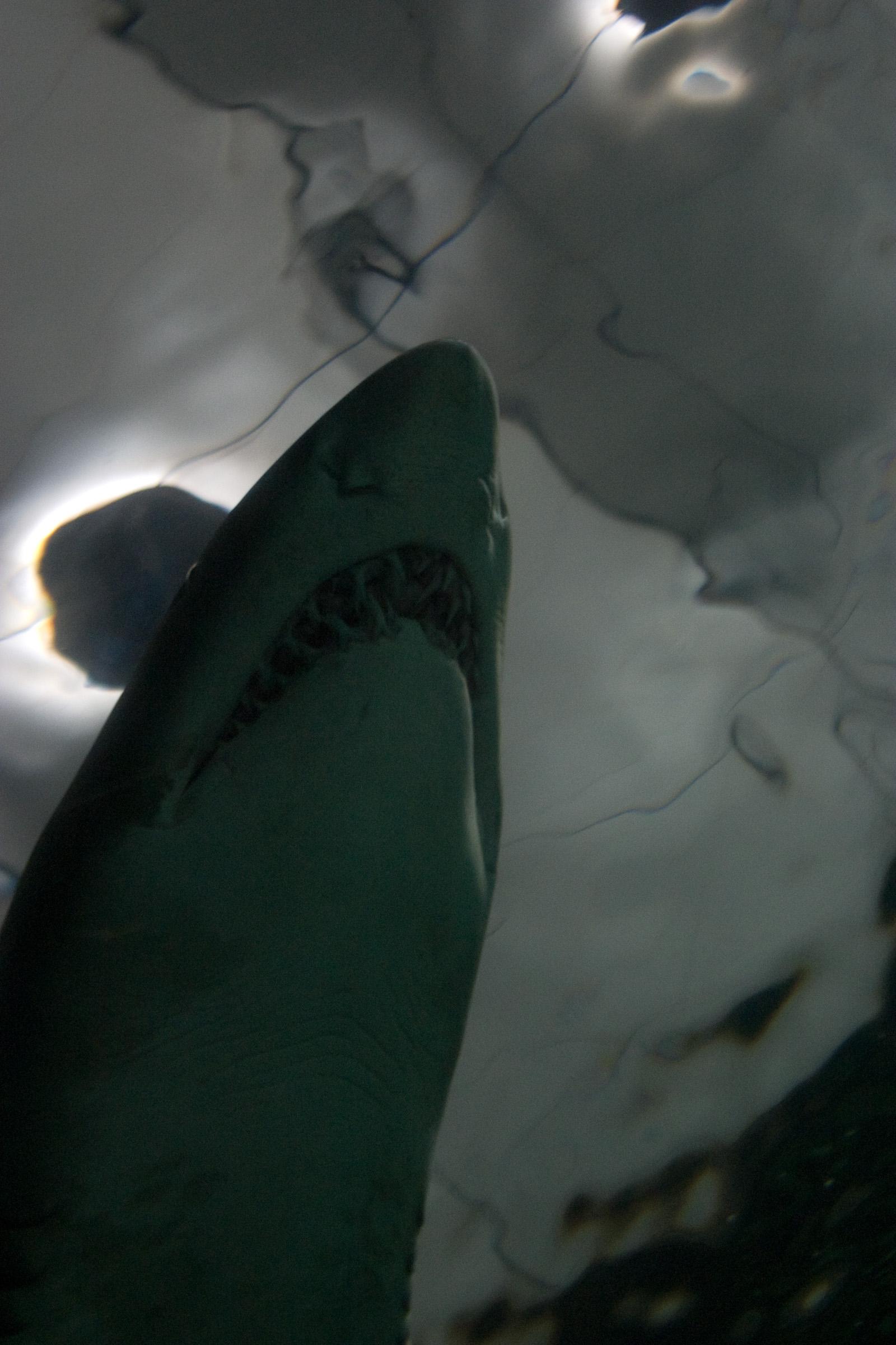 underwater-5413