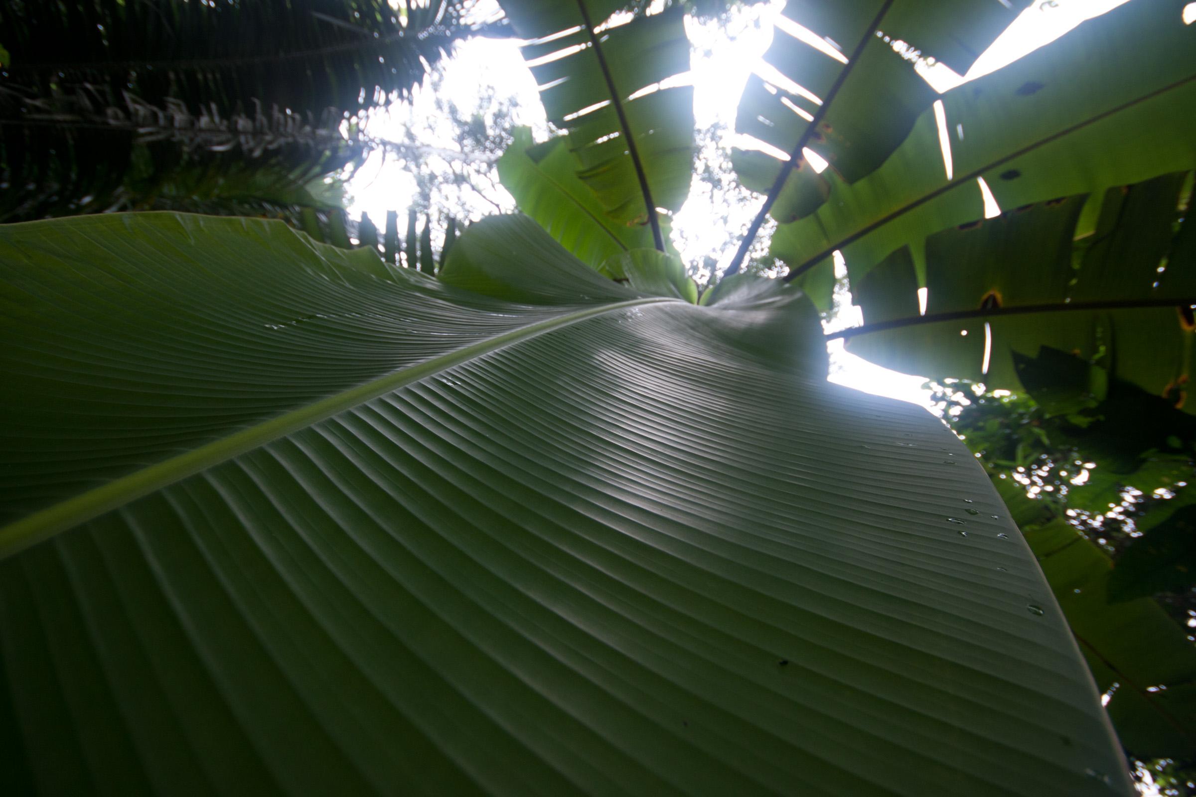 plants-1010