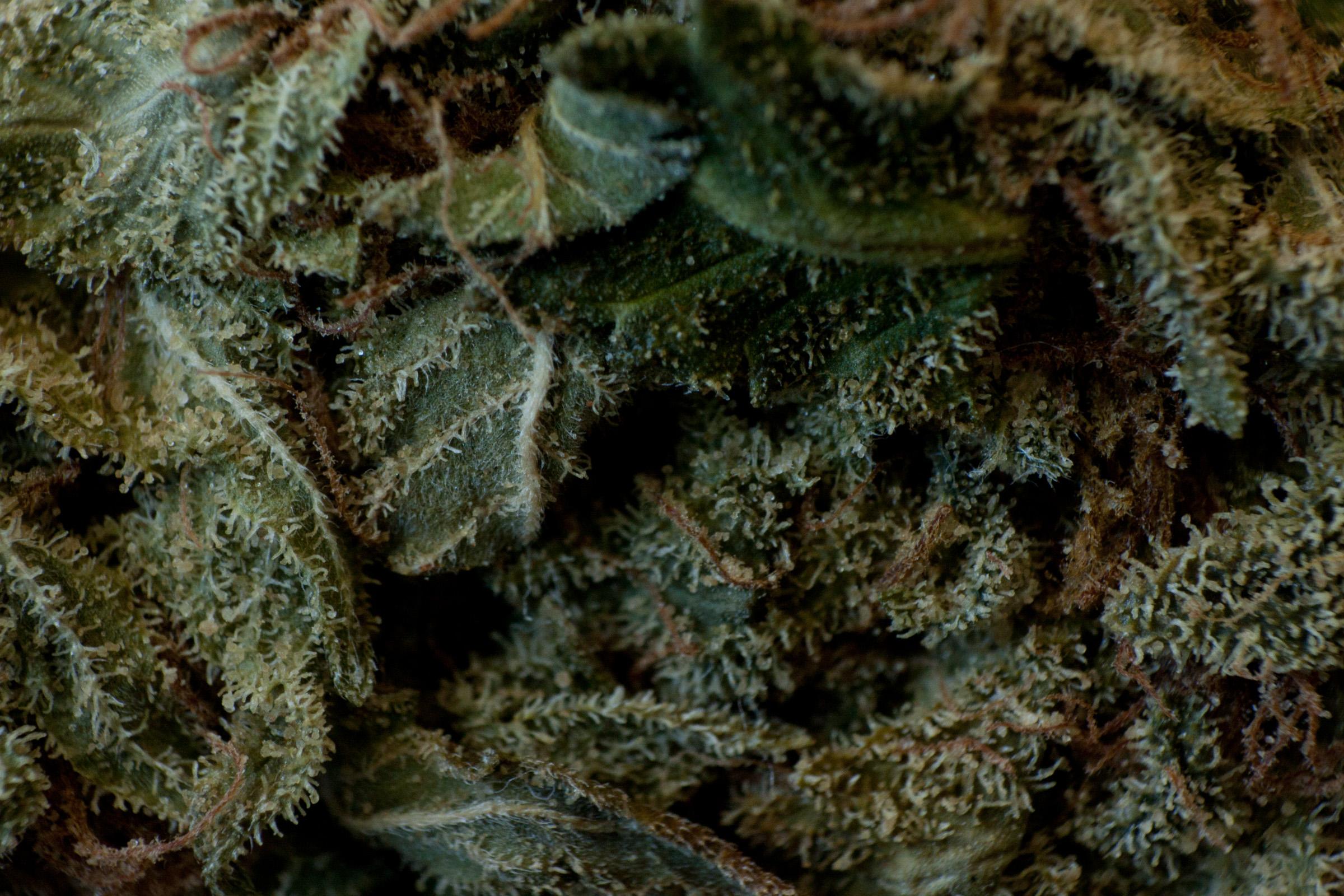 plants-8264