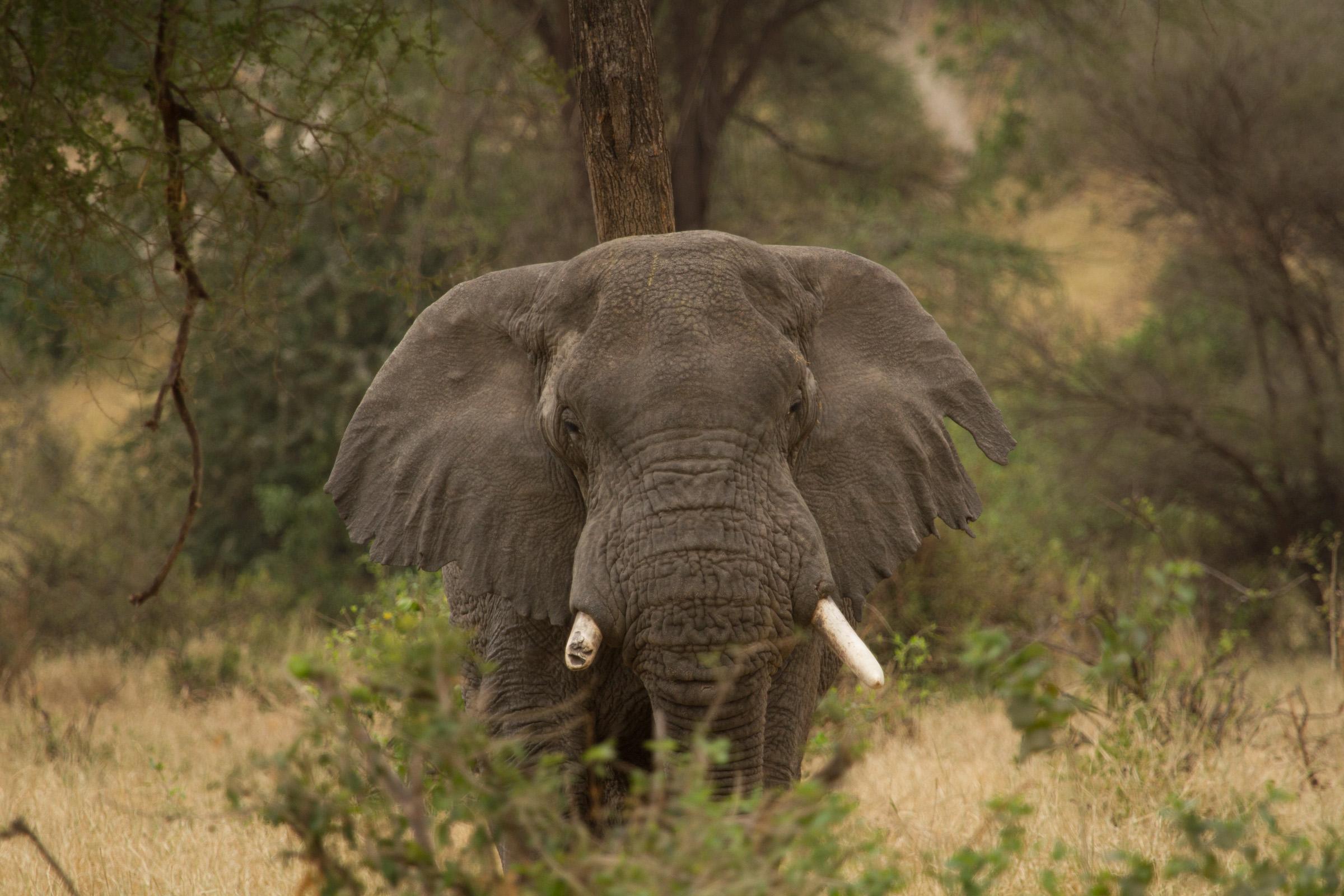 wildlife-8480